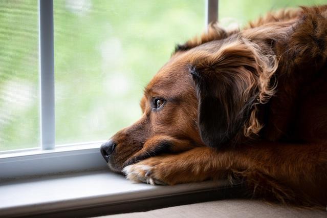 Préparez le chien à une absence